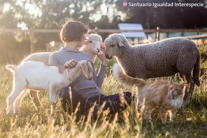 Imagen: Santuario Igualdad Interespecie